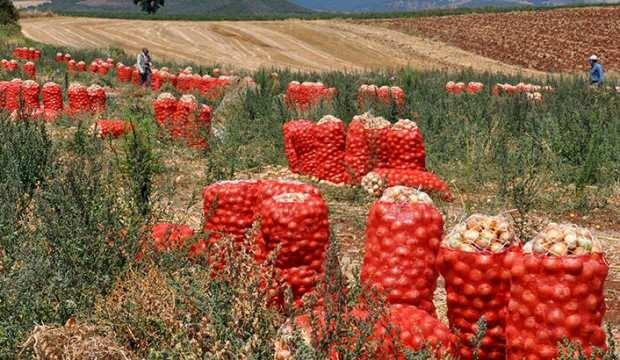 Soğan ihracatı kontrollü olarak yapılacak
