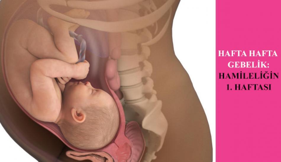 Hafta hafta gebelik: 1 haftalık hamilelik nasıl anlaşılır? 1. hafta hamilelik gelişimi