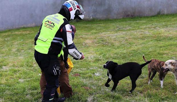 İHH Gönüllü Motorize Ekibi sokak hayvanlarına yiyecek ulaştırıyor