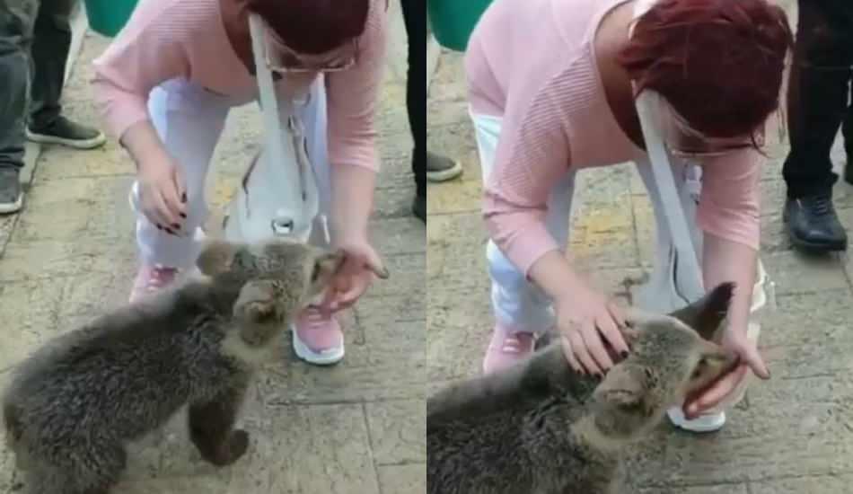 Emel Müftüoğlu beslediği yavru ayının saldırısına uğradı!