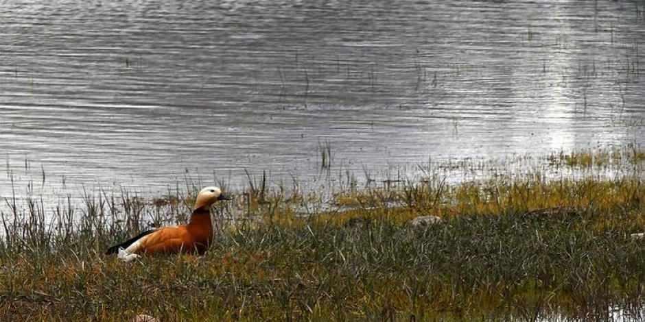 'Saklı cennet' Asboğa Gölü göçmen kuşlarla şenlendi