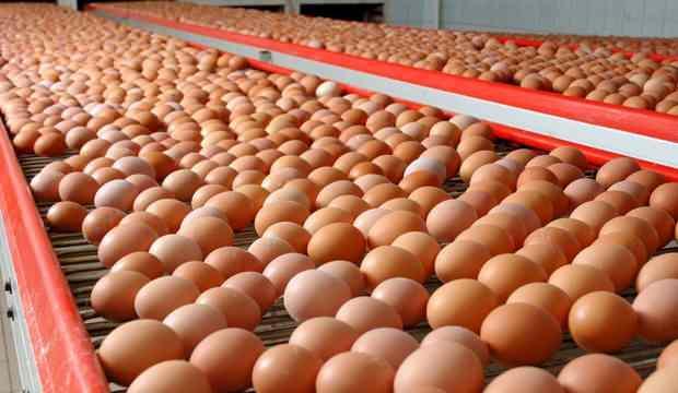 Tavuk yumurtasında rekor!
