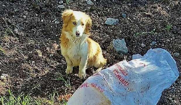 Ağzı bağlanan köpek çuval içinde ölüme terk edildi