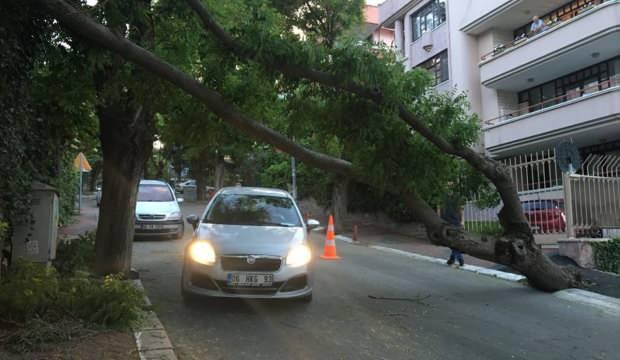 Ankara'da fırtına ağaçları devirdi