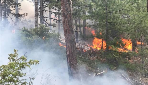 Uşak'ta korkutan yangın! Havadan ve karadan müdahale ediliyor