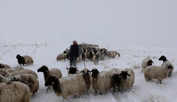 Koyunlarını yaylaya çıkaran çobana kar sürprizi!