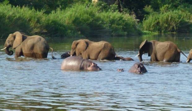 Su aygırı ve fil menüye girebilir! Tartışmalı yasa tasarısı