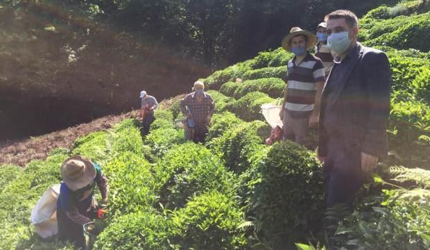 Virüse yakalanan köylülerinin çayını imece ile topladılar
