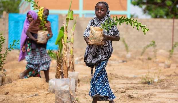 İDDEF'ten Afrika'da Fidan Seferberliği