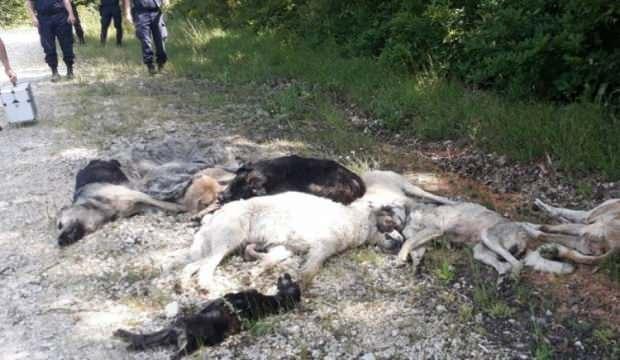Ormanda 12 köpek ölüsü bulundu