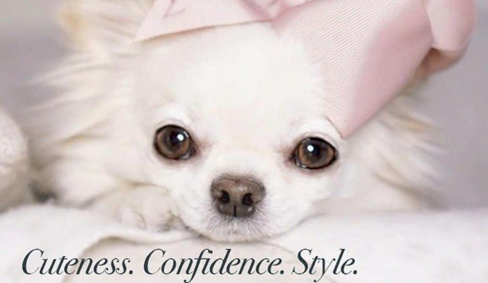 Köpekleriyle yepyeni bir moda akımı başlattılar! Vogue değil Dogue