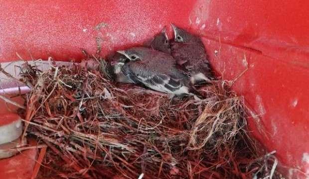 Kuşların yuva yaptığı beton mikseri 35 gündür çalıştırılmıyor