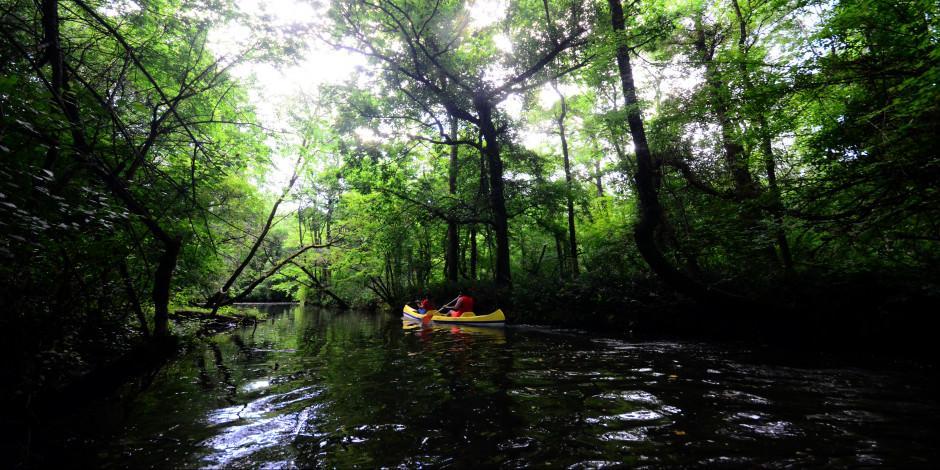 Trakya'nın saklı cenneti: İğneada Longoz Ormanları