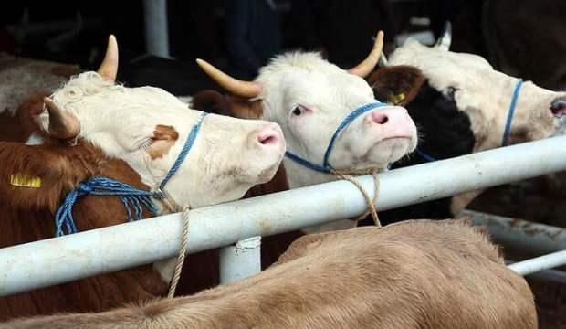 Türkiye'nin hayvancılık üssü