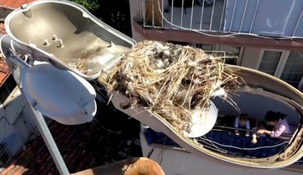 Bursa'da arıza için gittiler, kuş yuvasıyla karşılaştılar