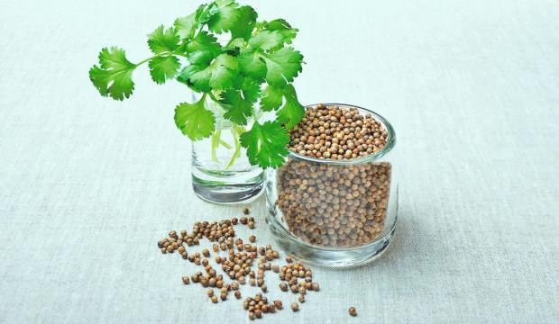 Kişniş tohumunun faydaları nelerdir? Kişniş tohumu çayı nasıl hazırlanır?