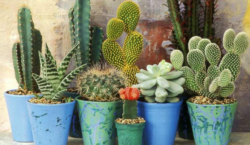Radyasyondan korunmak için evde bulundurmanız gereken bitkiler hangileridir?