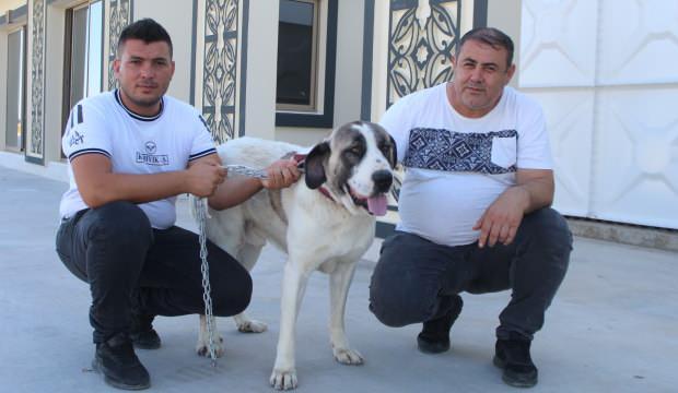 Yaralı köpeğe yardım etti, hayatının şokunu yaşadı