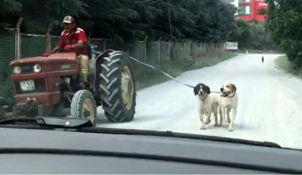 Köpekleri traktöre bağlayıp götürdü! Tepki yağdı