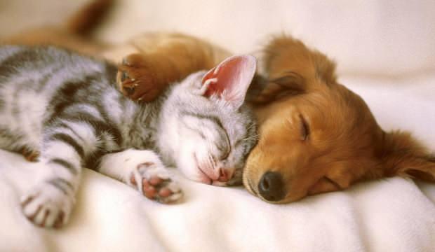 Rüyada yavru kedi görmek neye işaret? Rüyada kedi ve köpek yavrusu sevmek nasıl yorumlanır?