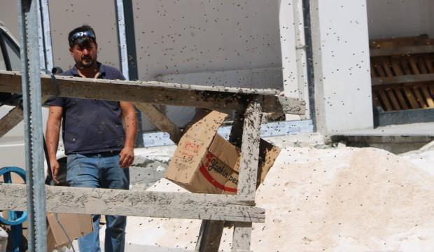 Yüzlerce bal arısı apartman inşaatını bastı