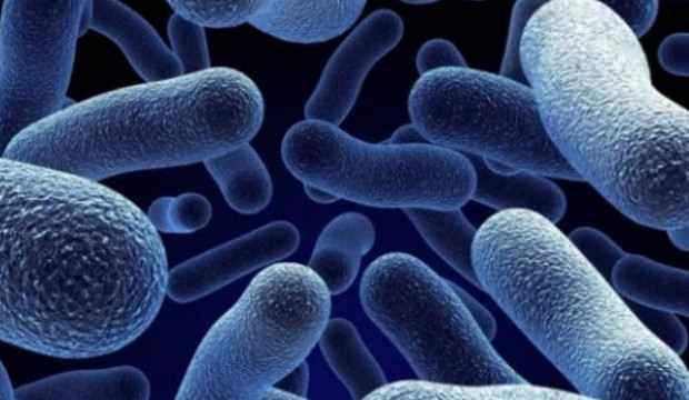 Kanada'da Salmonella paniği