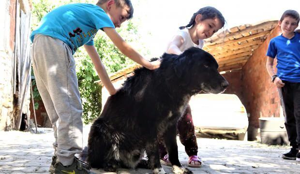 'Kurtlar parçalasın' diye dağa atılan köpekleri köylüler kurtardı