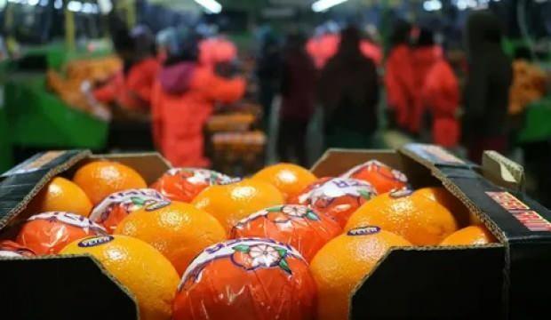 """Yaş meyve sebze ihracatına Doğu Akdeniz """"damgası"""""""