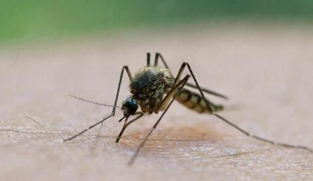 Birçok hayvan telef oldu, insanları da kör ediyor: Kan emici sinekler tehlike saçıyor