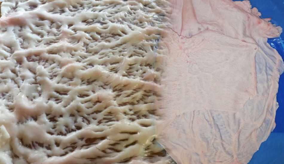 Gömlek yağı nedir ve nasıl pişirilir? Gömlek yağının faydaları