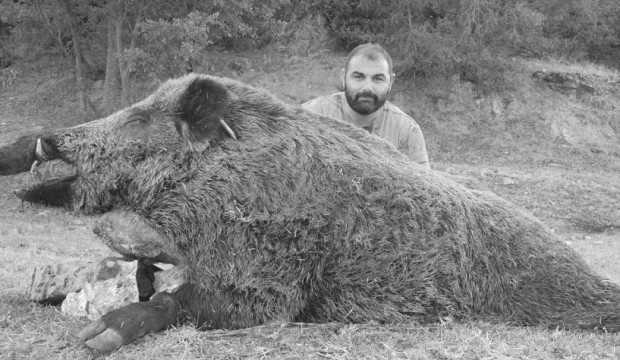 Tarlaları talan eden domuz zor yakalandı