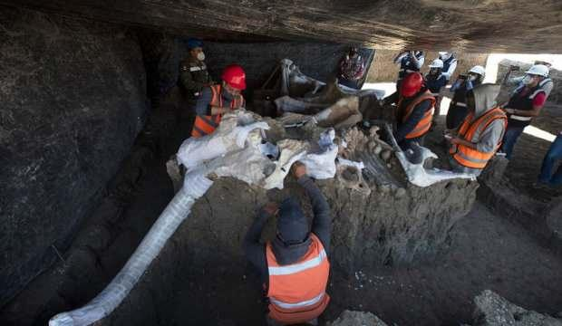 Sit alanında bulunan mamut fosillerinin sayısı 200'e yükseldi