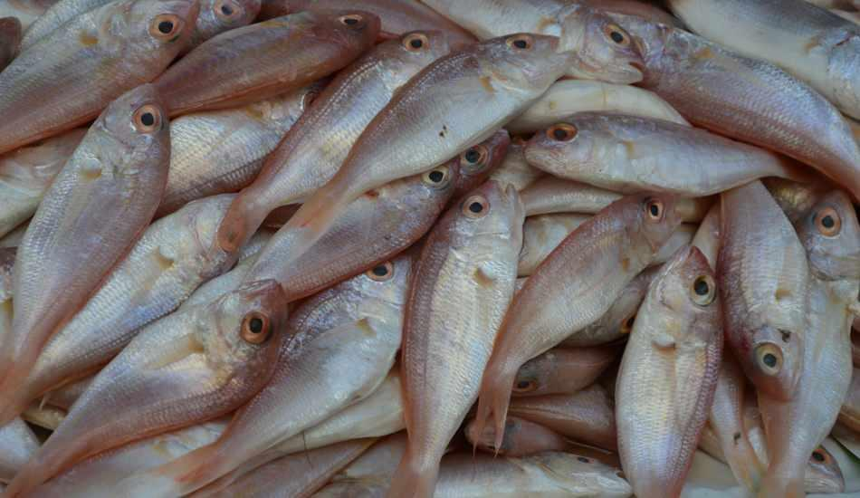 Tekir balığının faydaları nelerdir? Kanserli hücrelere karşı bağışıklık sistemini güçlendirir!