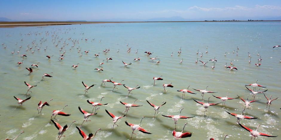 Flamingoların Bitlis durağı Arin Gölü