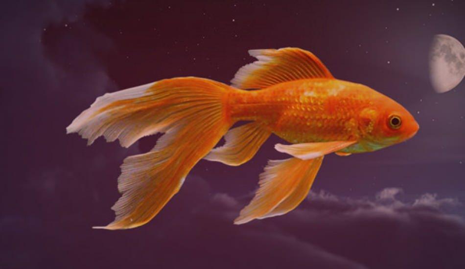Rüyada balık görmek ne demek? Rüyada balık tuttuğunu görmek
