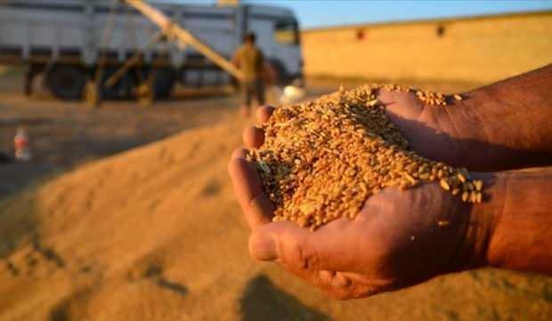 Buğdayda yüzde 8 artış bekleniyor