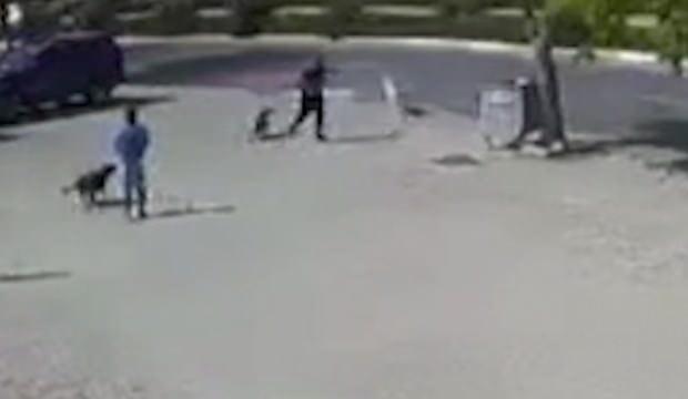 Büyükçekmece'de vahşet! Sokak köpeğini silahla öldüren saldırgan kamerada