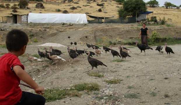 Kendi çiftliğini kurdu: Bir yılda 200 bin adet tavuk sattı