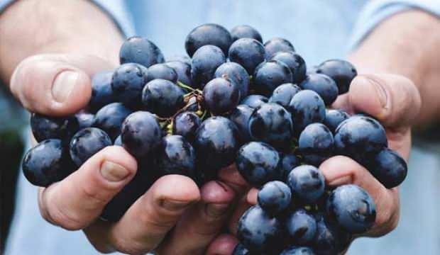Kokulu üzümün faydaları nelerdir? Kokulu üzüm suyu nasıl yazılır?