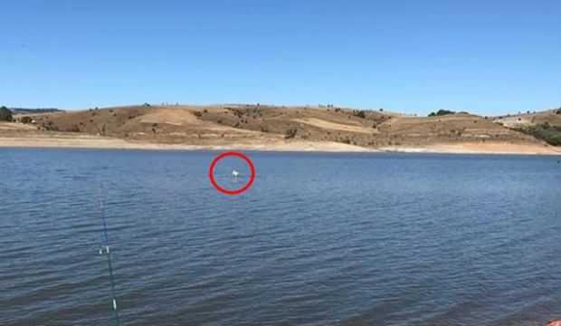 Sürüden ayrılınca baraj suyunda mahsur kaldı