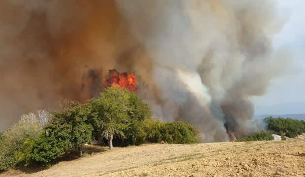 Osmaniye'de ormanlık alanda yangın! Alevler evlere de sıçradı - GÜNCEL  Haberleri