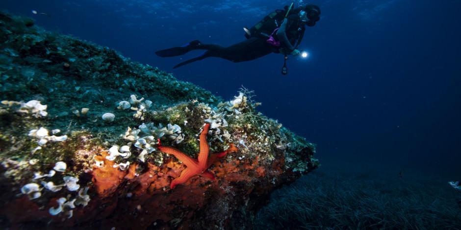Sonbaharda dalış turizminin adresi: Ayvalık