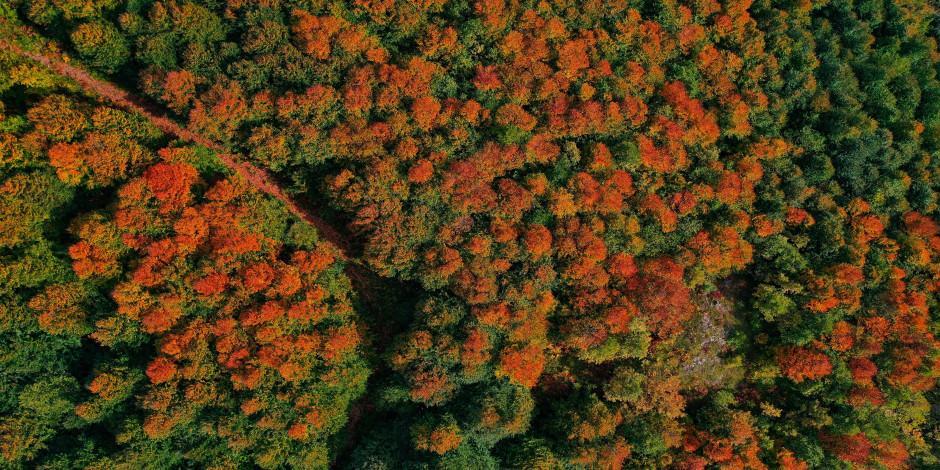 İstanbul'a yakın en güzel sonbahar manzaraları