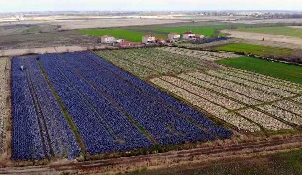 Samsun yerli ve milli tarım üretiminde Türkiye birincisi