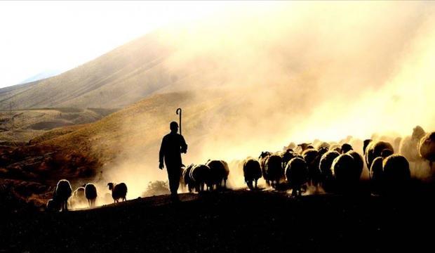 2020-2022 dönemi hayvancılık yatırım destekleri belirlendi