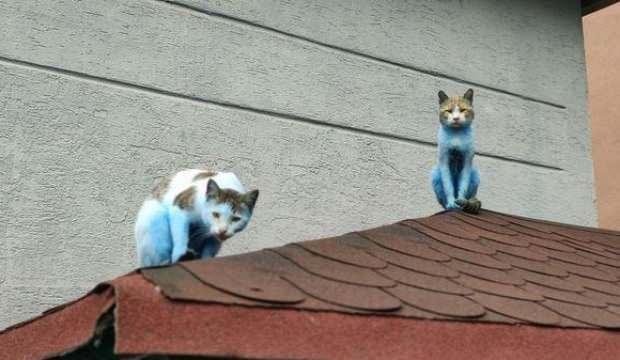 Mahalledeki kediler şirinlere döndü! Görenler inanamadı