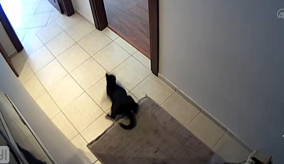 Deprem anında kedinin kaçışması güvenlik kamerasında!