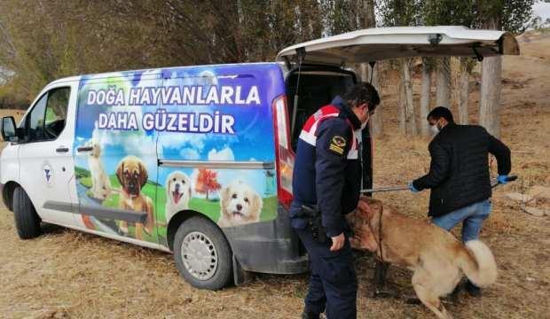 Bahisle köpek dövüştüren 8 kişiye ceza yağdı