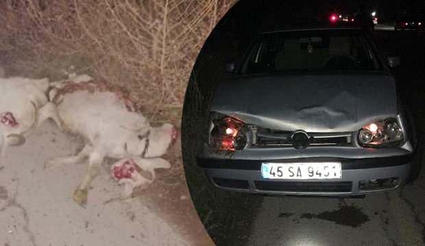 Otomobil sürüye çarptı: 12 koyun telef oldu