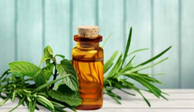 Çay ağacı yağının faydaları nelerdir? Çay ağacı yağının saça ve cilde faydaları..
